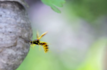 Why do wasps attack aggressively and more!