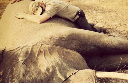 Prince Harry stands up for Rhinos, lions and elephants!